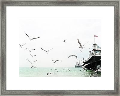 Seaside Seagulls Framed Print by Richard Newstead