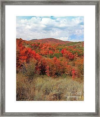 Season Of Change  Framed Print by Carla   Stanley