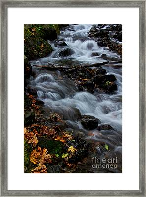 Seasonal Rush Framed Print by Marcus Angeline
