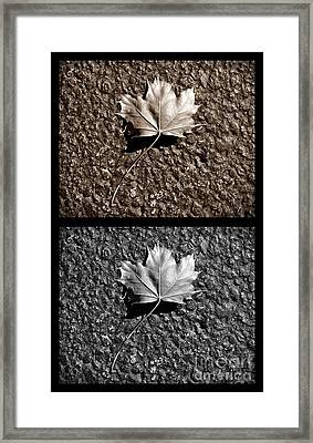Seasons Of Change Framed Print by Luke Moore