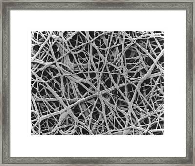 Sem Of Internal Membrane Of Hen Eggshell Framed Print by