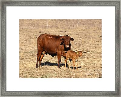 Senopol Surrogate With Calf Framed Print by Science Source