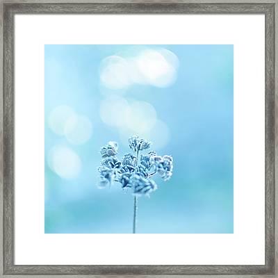 September Frost Framed Print by Alexandre Fundone