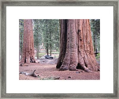 Sequoia  Trees 2 Framed Print by Naxart Studio