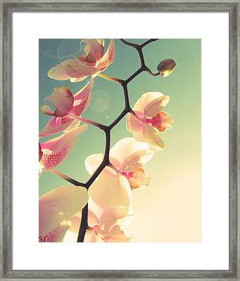 Serenade Framed Print by Amy Tyler