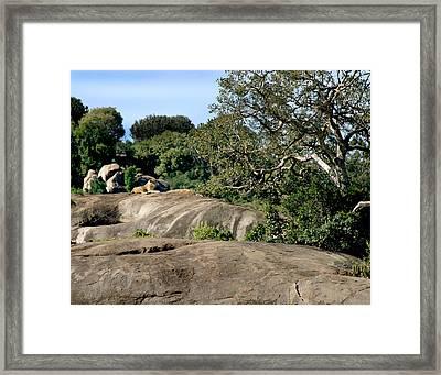 Serengeti Walkabout Framed Print by Joseph G Holland