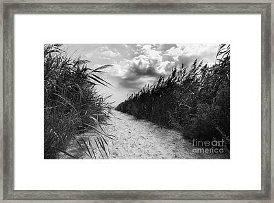 Serenity Framed Print by Scott Allison