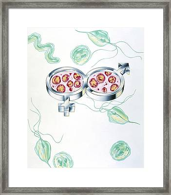 Sexually Transmitted Diseases Framed Print by John Bavosi