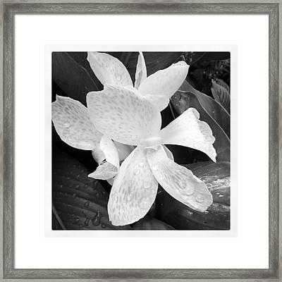 Shades Of Grey Framed Print by Chasity Johnson