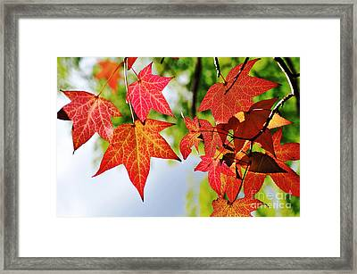 Shades Of Red Framed Print by Kaye Menner