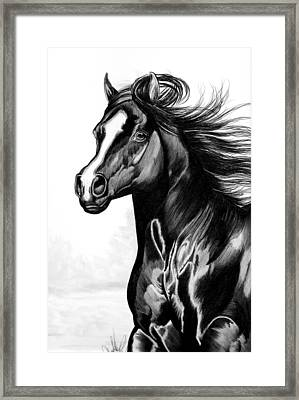 Shading Of A Horse In Bic Pen Framed Print by Cheryl Poland