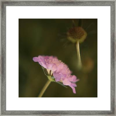 Shadow And Light Framed Print by Bonnie Bruno