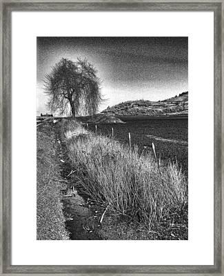 Shaggy Tree Framed Print by Bonnie Bruno