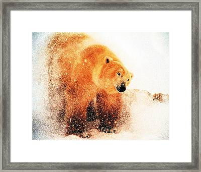 Shaking Off Framed Print by Alice Ramirez