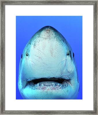 Shark Framed Print by Don Carpenter of eurisko Photography