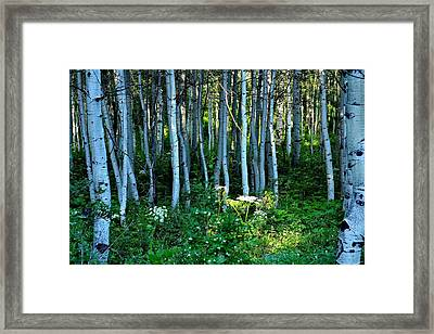 Shedding Light Framed Print by Nick Pantuso