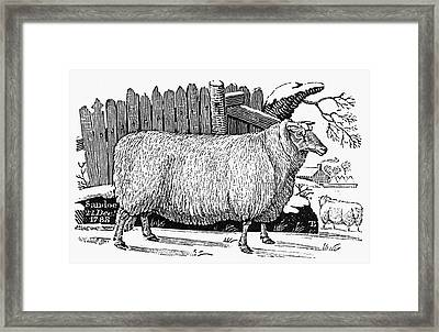 Sheep, 1788 Framed Print by Granger