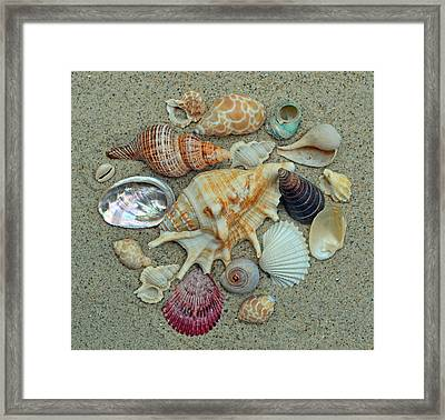 Shell Collection 2 Framed Print by Sandi OReilly