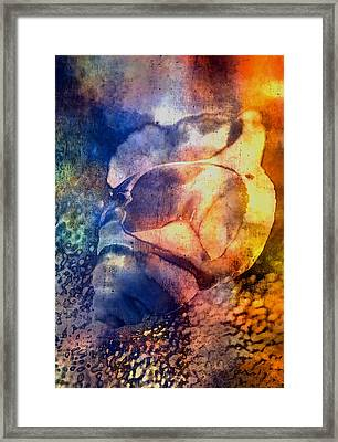 Shell Framed Print by Mauro Celotti
