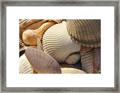 Shells 1 Framed Print by Mike McGlothlen