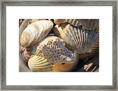 Shells 3 Framed Print by Mike McGlothlen