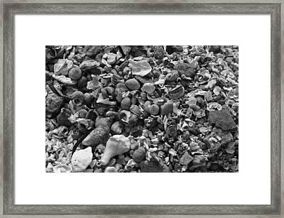 Shells Iv Framed Print by David Rucker