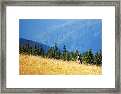 Shepherd Framed Print by Gabriela Insuratelu