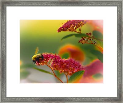 Sherbet Pollination Framed Print by DigiArt Diaries by Vicky B Fuller