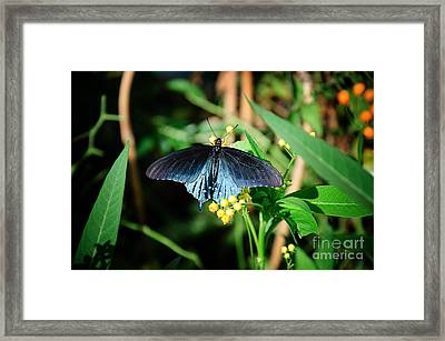 Shimmering Beauty Framed Print by Andee Design