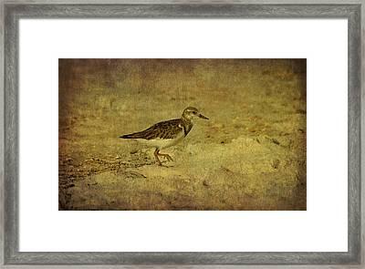 Shore Bird Framed Print by Sandy Keeton