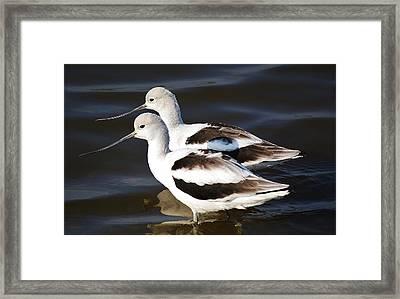 Shore Birds Framed Print by Paulette Thomas