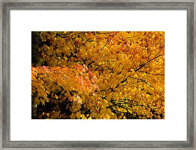 Showing Off Framed Print by Rich Franco