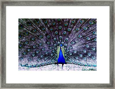 Showoff Framed Print by Eric Chapman