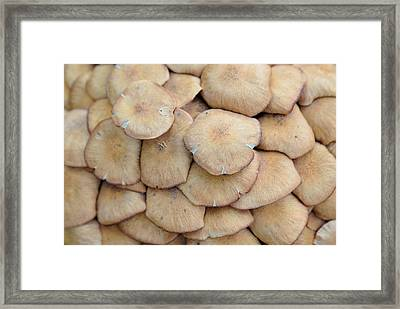 'shroom Layers Framed Print by
