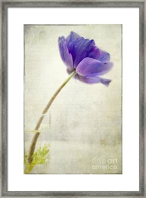 Shy Anemone Framed Print by Marion Galt