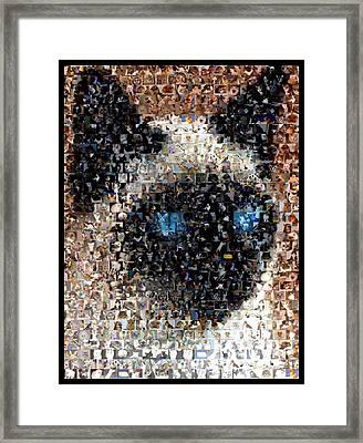 Siamese Cat Mosaic Framed Print by Paul Van Scott