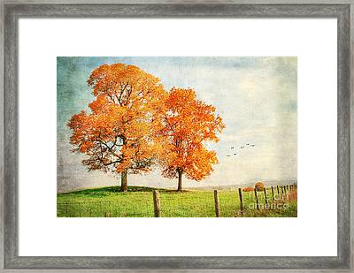 Siblings Framed Print by Darren Fisher