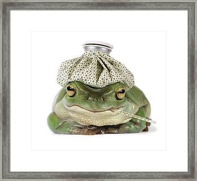 Sick Frog Framed Print by Darwin Wiggett