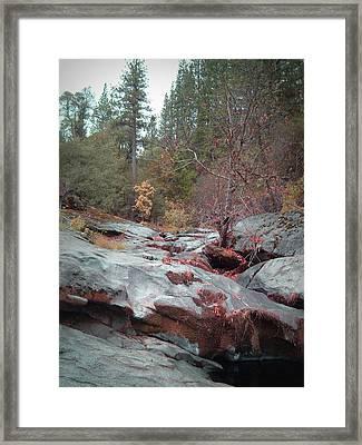 Sierra Nevada Forest 1 Framed Print by Naxart Studio