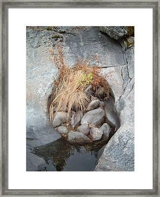 Sierra Nevada Forest 2 Framed Print by Naxart Studio