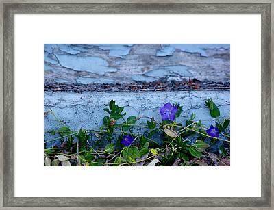 Signs Of Spring Framed Print by Vicki Pelham