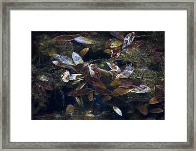 Silent Fall Framed Print by Ron Jones