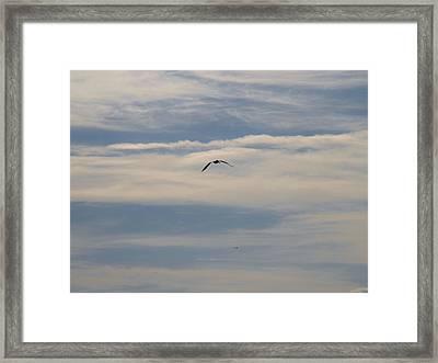 Silent Flight Framed Print by E Luiza Picciano