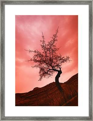 Silhouette Of Shrub Tree Framed Print by Don Hammond