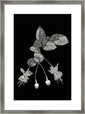 Silver Fuchsia Flowers On A Black Background Framed Print by Mike Hill