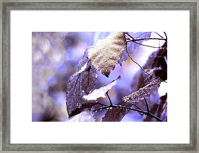 Silver Rain. The Garden Of Dreams Framed Print by Jenny Rainbow