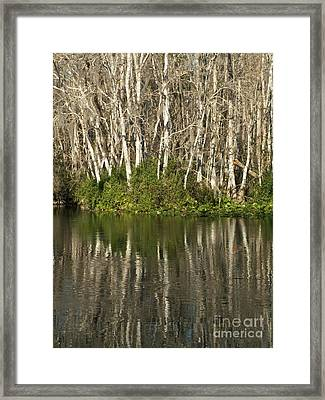 Silver River Reflections Framed Print by Theresa Willingham