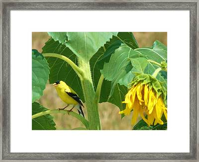 Sing For Me Framed Print by Jeanette Oberholtzer