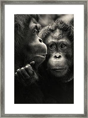 Singapore Zoo Framed Print by By Toonman