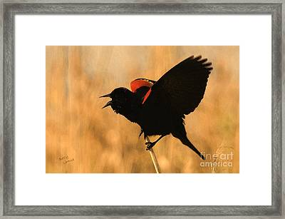 Singing At Sunset Framed Print by Betty LaRue
